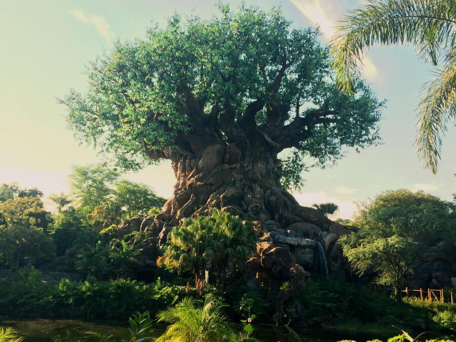 Tree of life - התורים הכי יפים בדיסני וורלד